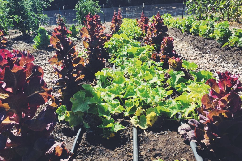 Saddlerock gardens