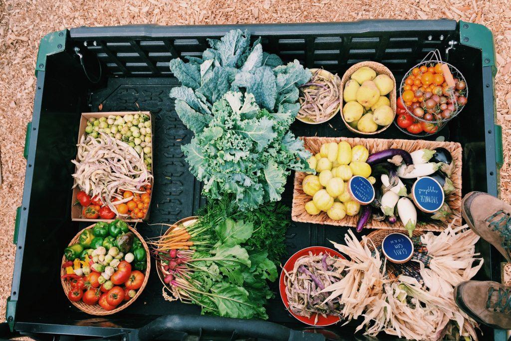 saddlerock garden veggies