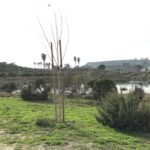 legacy park bushes/trees