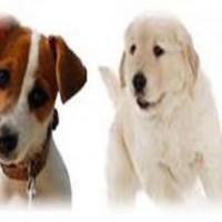 Paws Pet Care Services